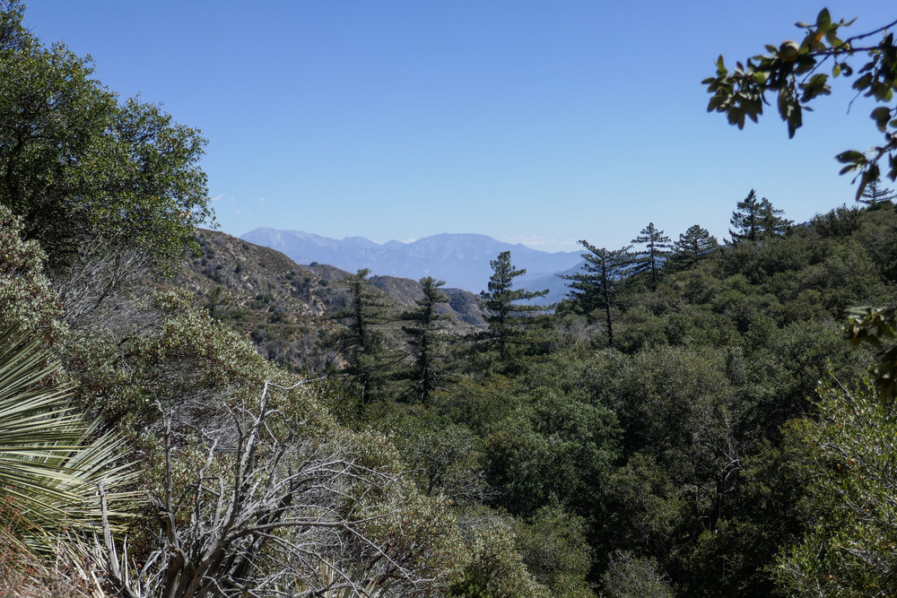 Almost back to Red Box. Climbing out of the canyon, we took in the views of Cucamonga Peak, Pine Mountain and Mount San Antonio.