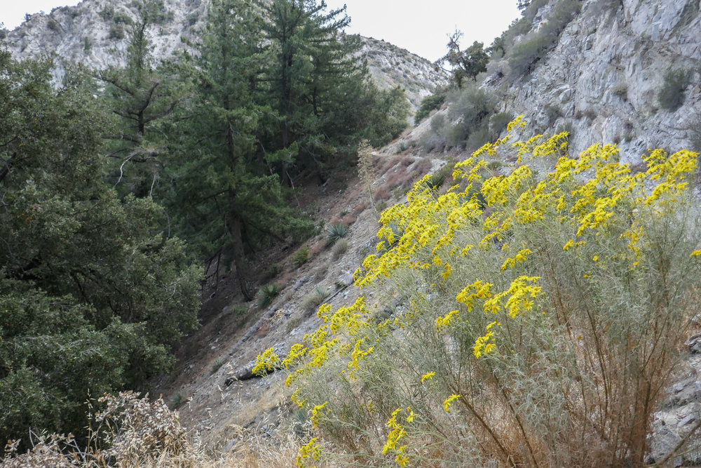 On the opposite side of the tunnel, we were greeted by cheerful yellow wildflowers.