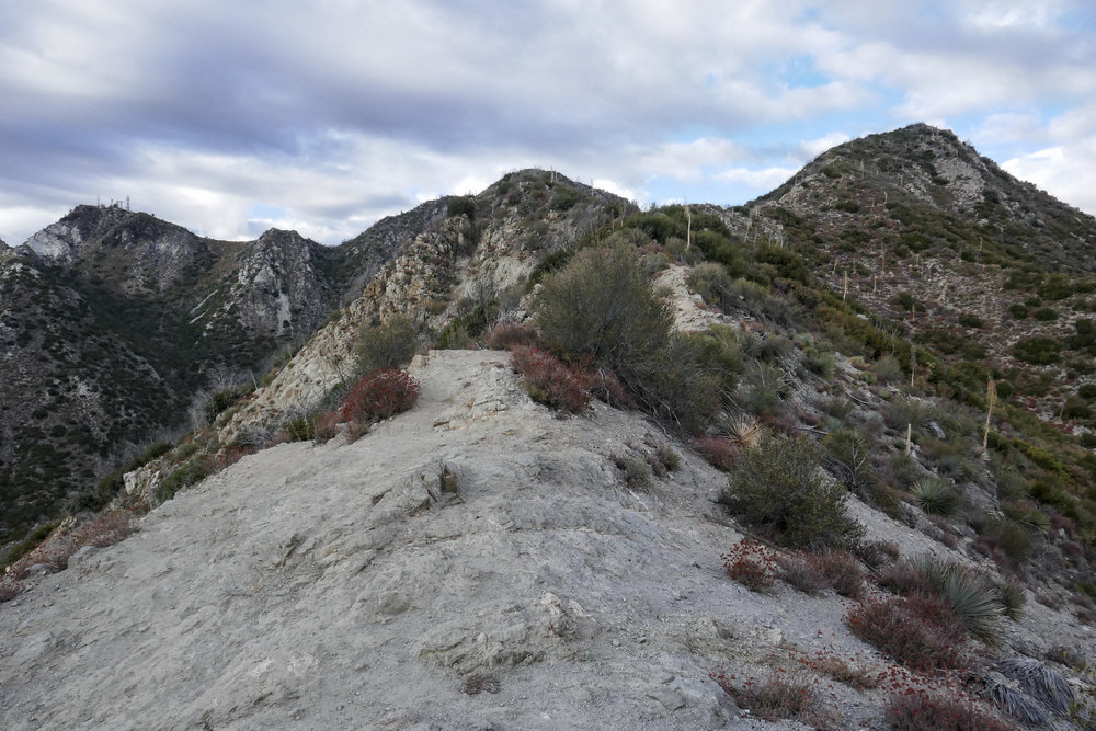 We reached the saddle between Mt. Markham and Mt. Lowe. This photo is looking back at the trail to hike up to Mt. Markham on the far right. Mt. Disappointment is on the far left in the distance and San Gabriel Peak in the middle.
