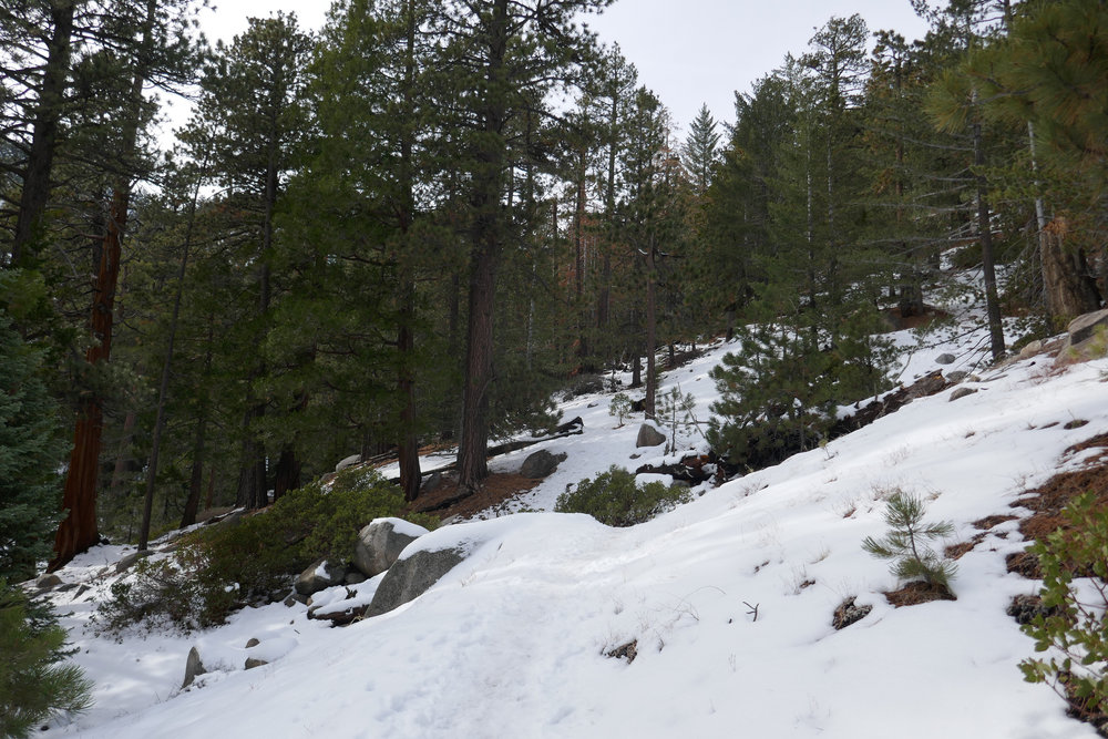We headed up to Waterman Mountain after Pacifico Mountain didn't work out. Waterman is always reliable for snow and I feel safe here.