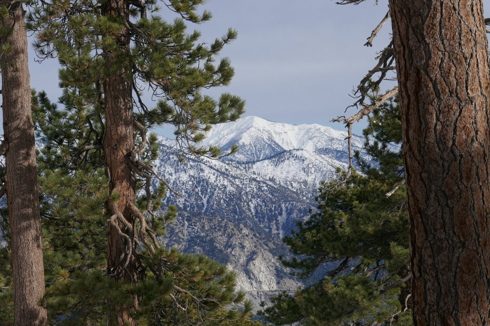 Snow capped Mount Baden-Powell.