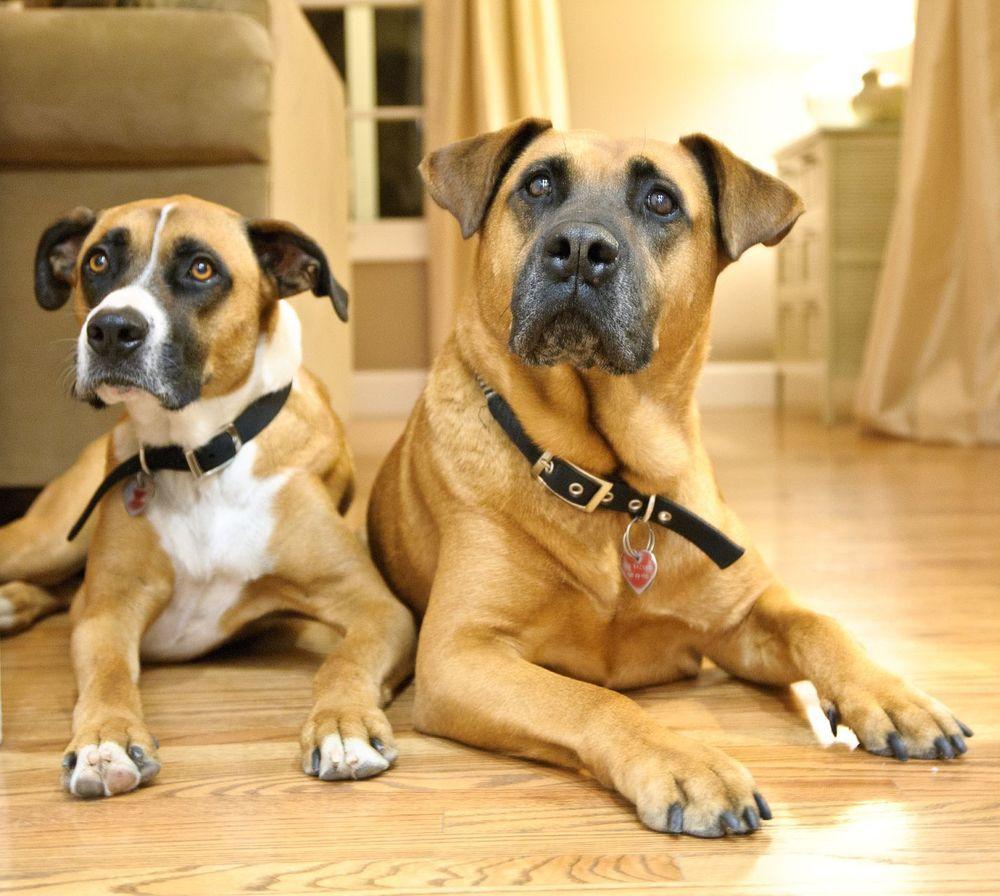 Bowzer & Oso