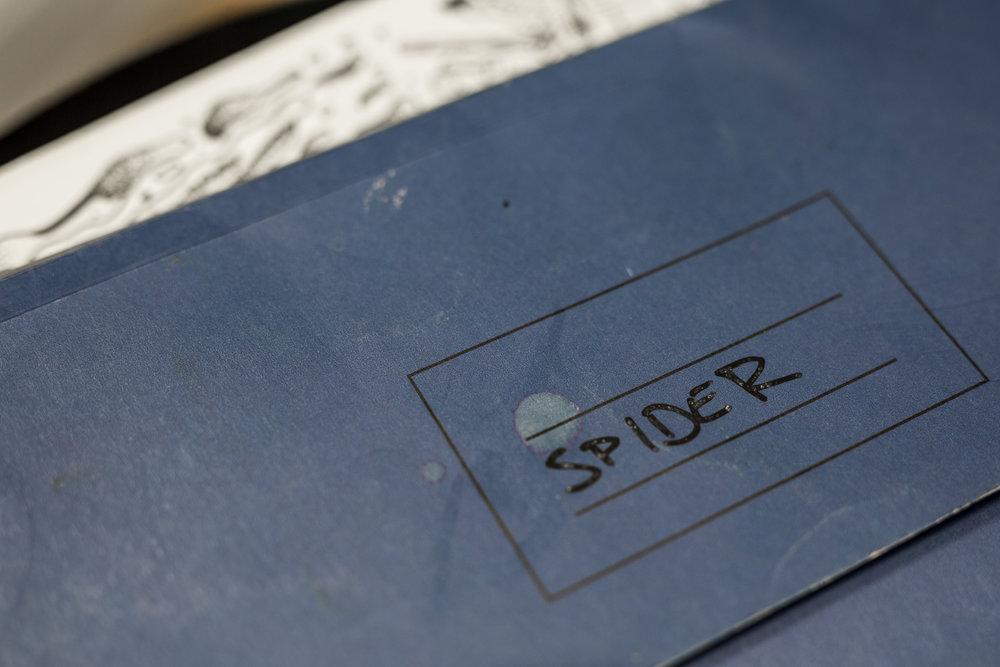 rolan_john_photo_spider_-1.jpg