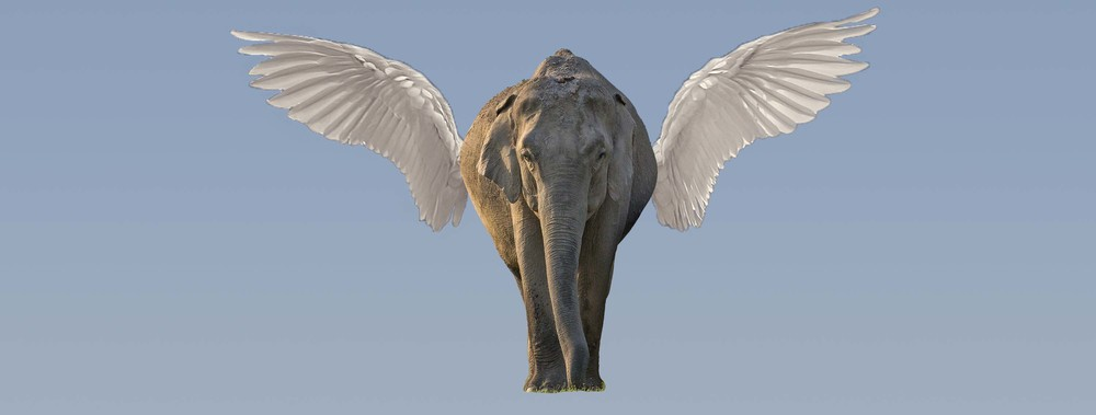 Sure, it's a flying elephant. You mean, you've never seen a flying elephant before?