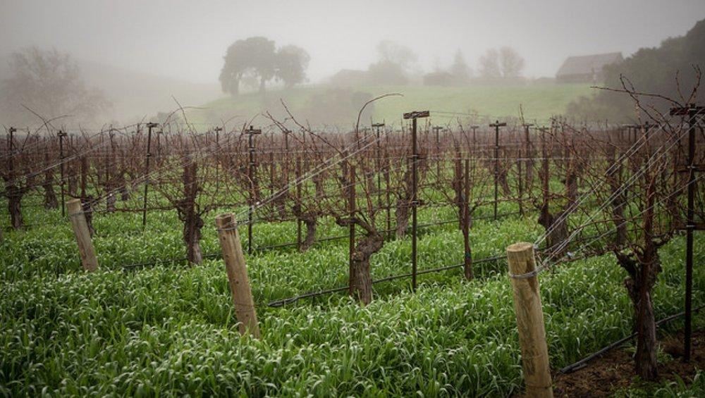Vineyard 2.jpg