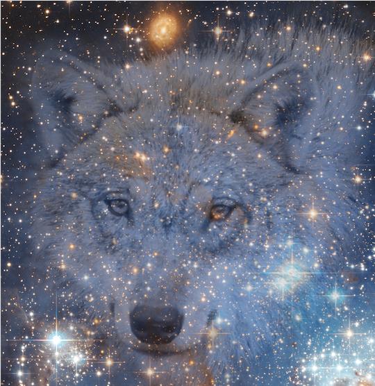 Wolf krachtdieren.png