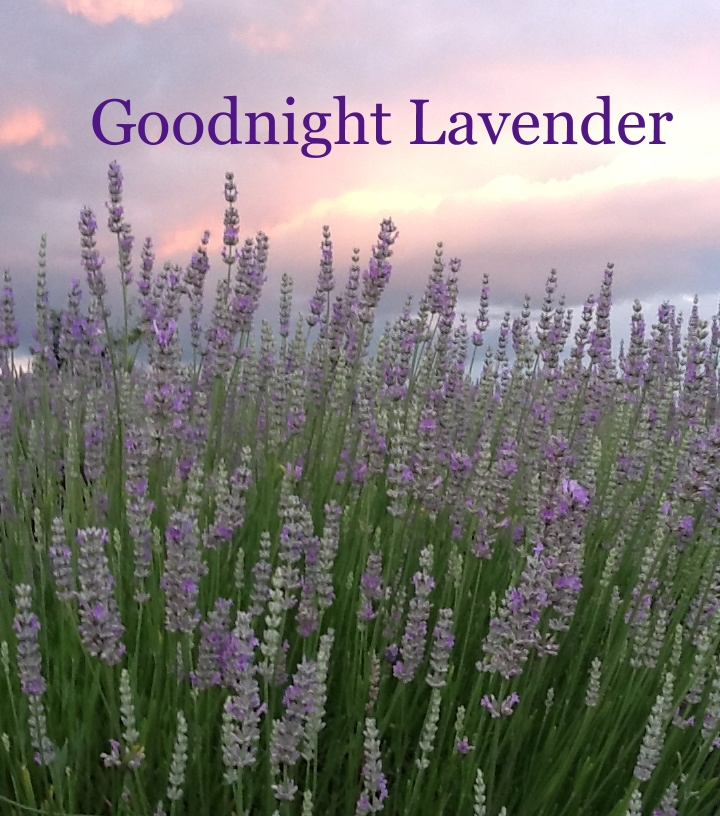 Goodnight Lavender