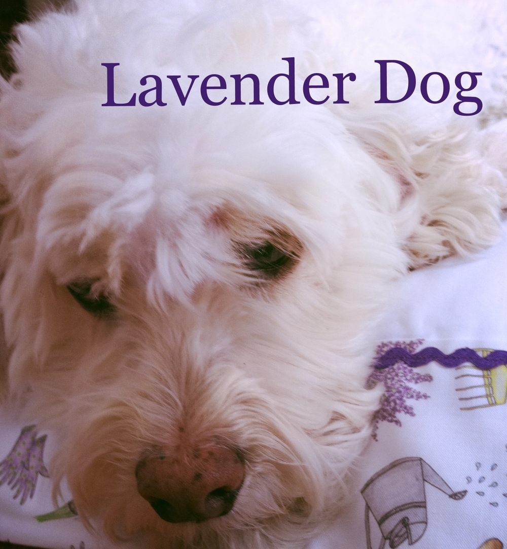 Lavender Dog