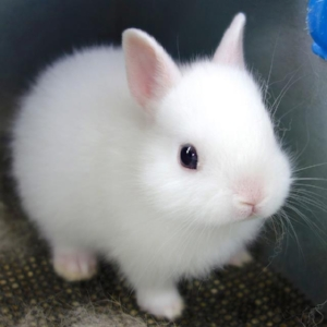 cutest white baby bunny