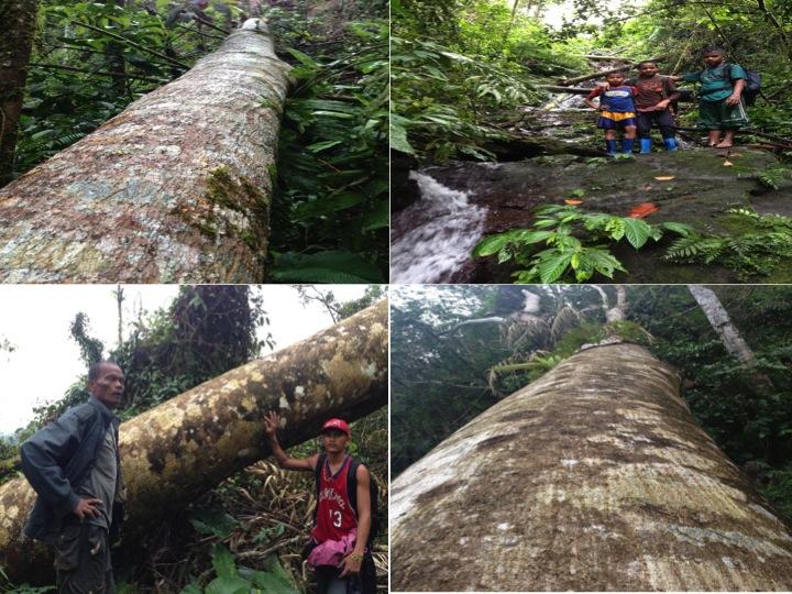 Rain Forest devastation by Typhoon Pablo
