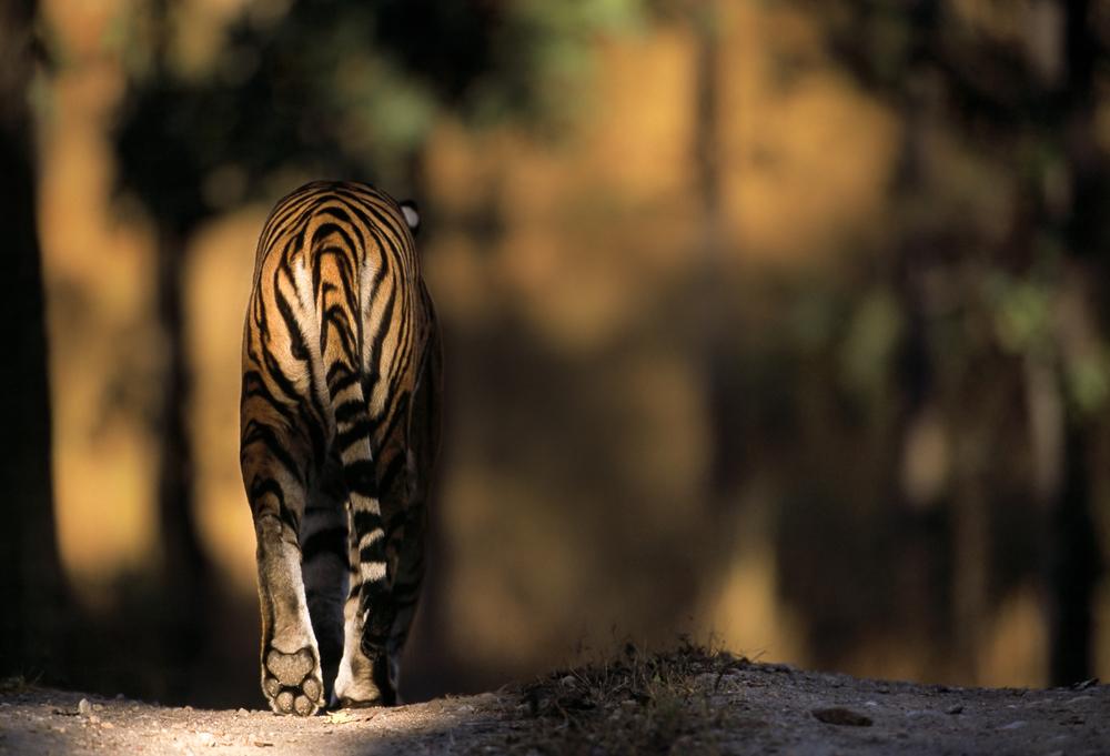 Our habitats endangered