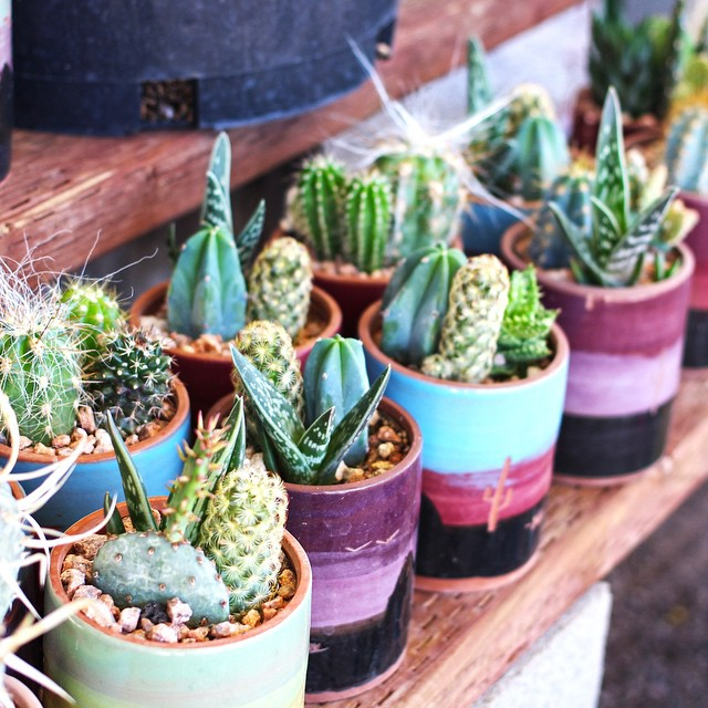 Dozens of new mini cactus pots available. 😍🌵 #buylocal #instagramaz #whyaz  #locallyowned  #az365 #instaaz #igerstucson #tucson #pottery #metal #art #sculpture #fountain #landscaping #decore #talavera #tucson #greenvalley #orovalley #igersaz #arizona #cactus #cacti #succulents #succulent #succulentlove