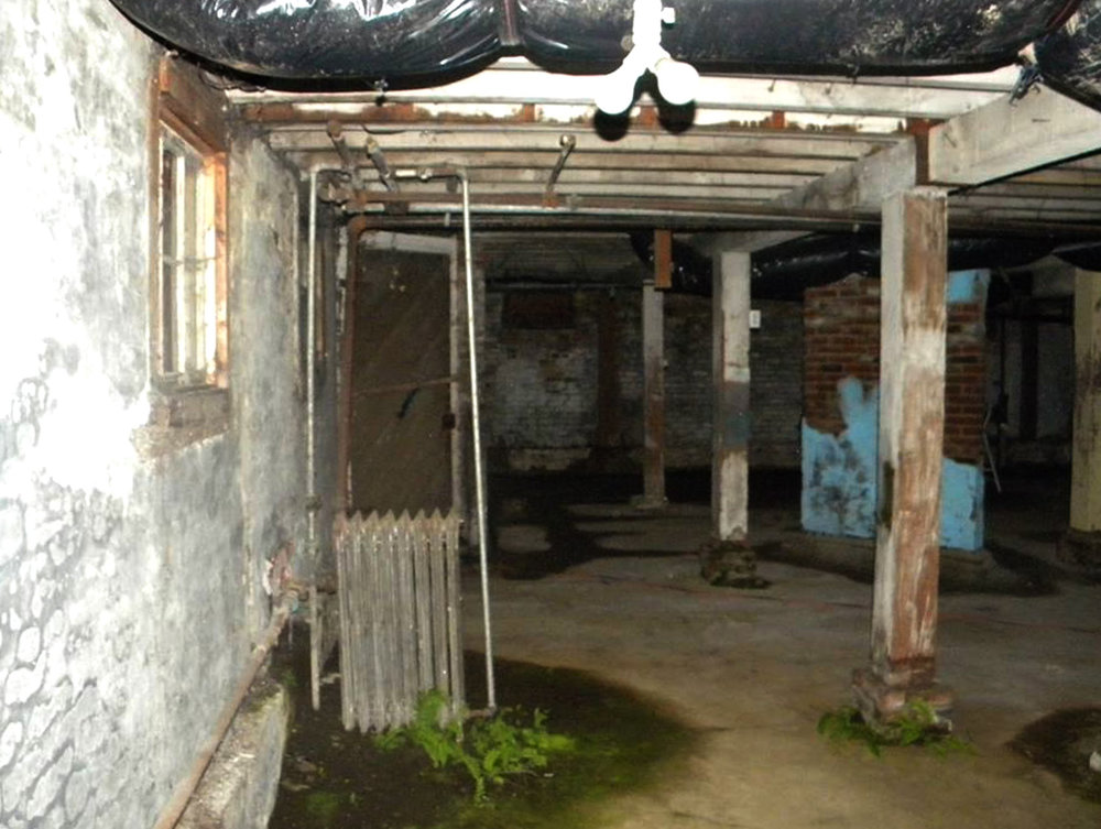 The Walker Ames Mansion's basement is a suitable habitat for ferns.   Photo courtesy of Puget Sound Ghost Hunters.