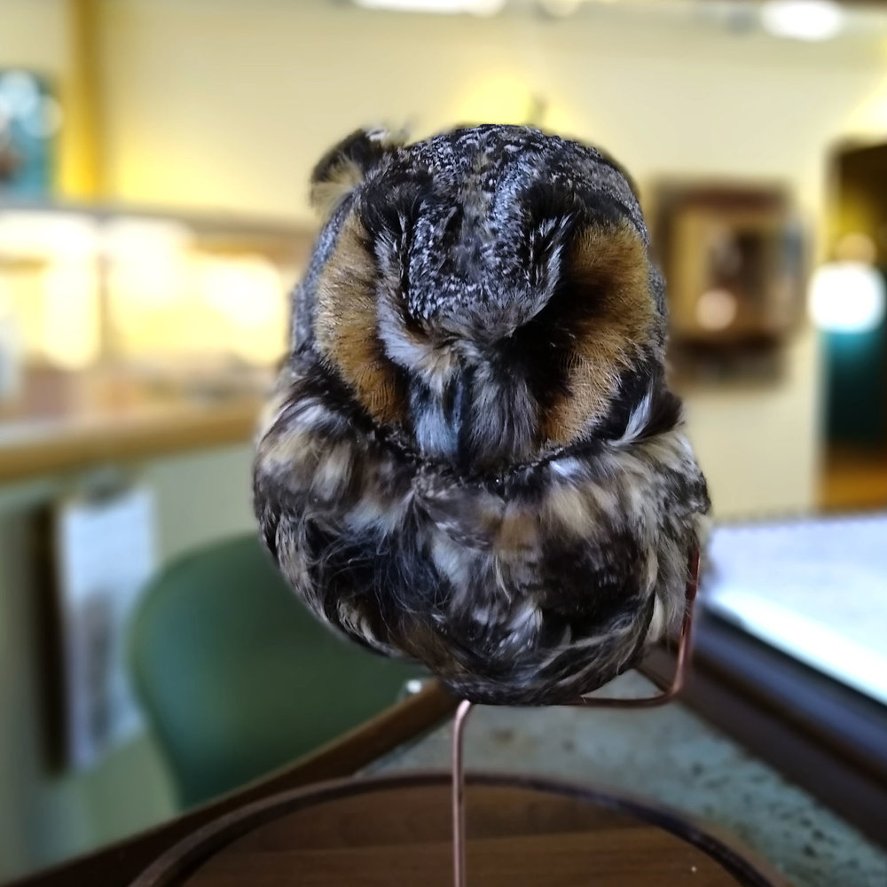 A severed owl head that Kryssanne preserved in salt and donated to the  Mindport Museum