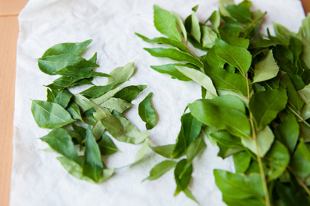 Fresh curry leaves are really hard to find. There are actually only two places I can find them in the East Bay, Ranch 99 and Berkeley Bowl. I'm surprised that it isn't in more places. If you can't get fresh then try to find it dried and use twice as much.