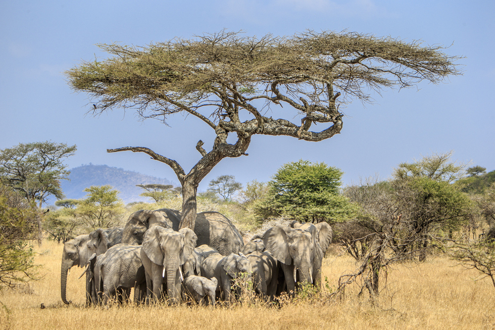 Reznicki_Africa__081.jpg