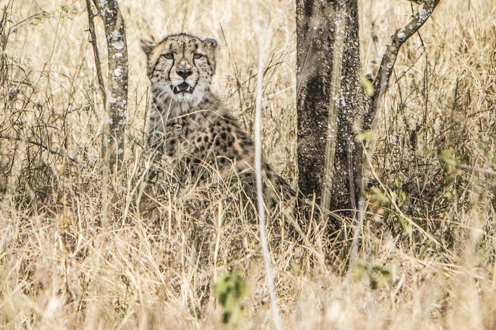 Reznicki_Africa__080.jpg