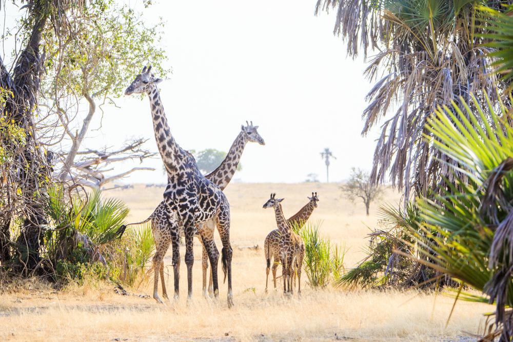 Reznicki_Africa__094.jpg