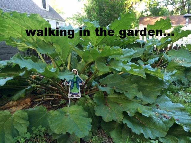 wandering the rhubarb.jpg
