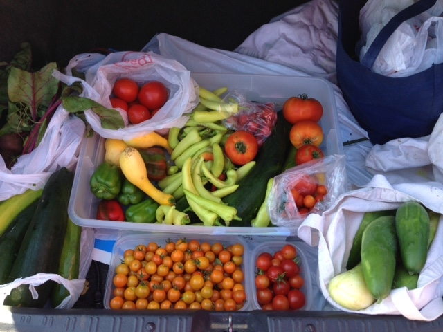 August 8: tomatoes, peppers, and cucumbers, oh my!