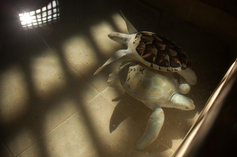 tortugas.overlay