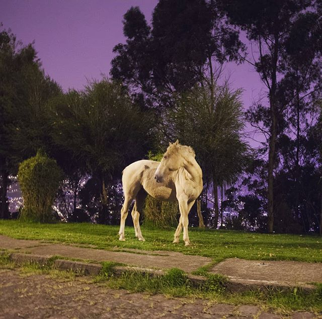 Remembering purple skies and roadside horses in Ecuador, 2014