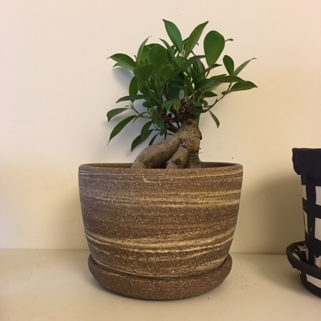 One of my planters on display at Mr Kitly