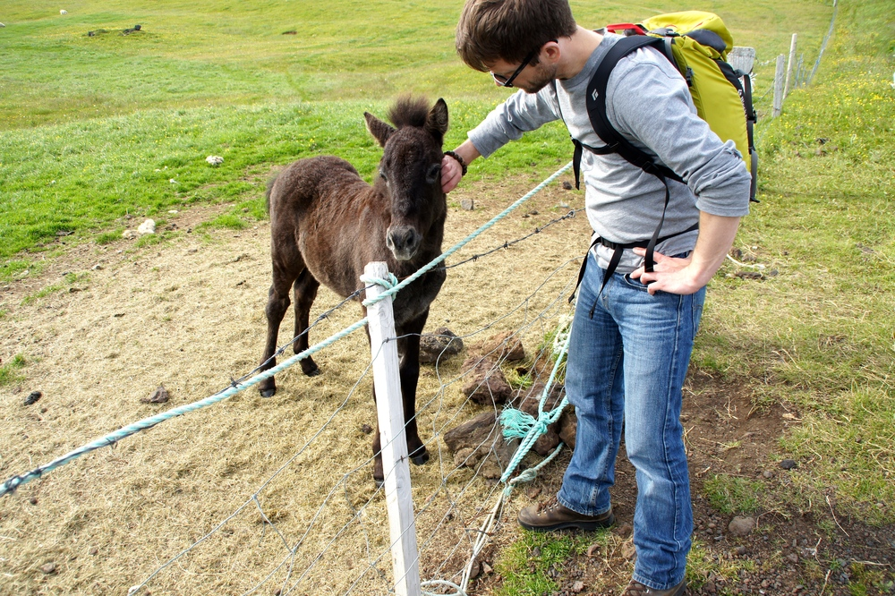 Chris befriending a young foal.