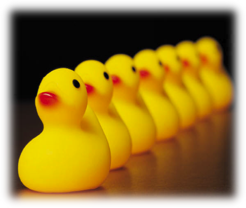 Ducks lined up.png