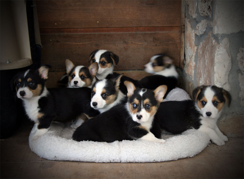 Group at 8 weeks