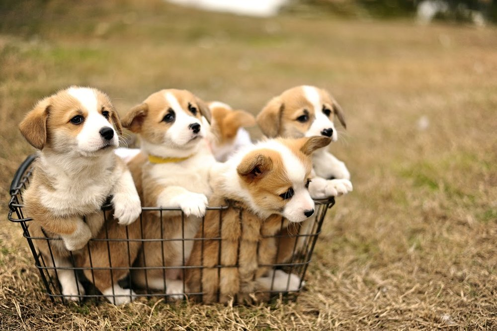 puppy-group.jpg