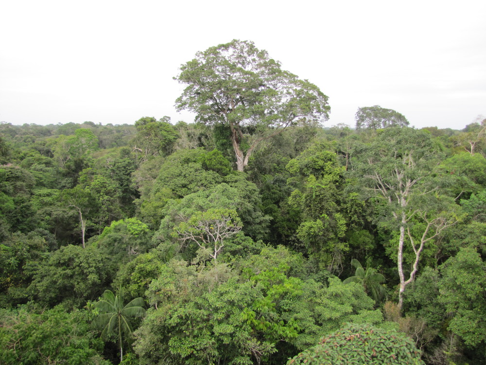 View from the Canopy Tower at Refugio Amazonas