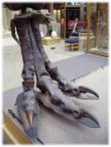 Tyrannosaurus rex foot. Image credit: http://jerseyboyshuntdino aurs.blogspot.com