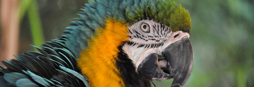 beakman_bluegold_macaw.jpg