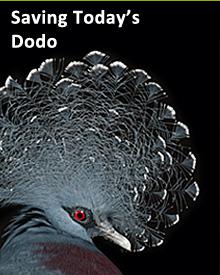 Saving Dodo.jpg