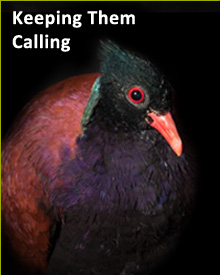Keep Calling.jpg
