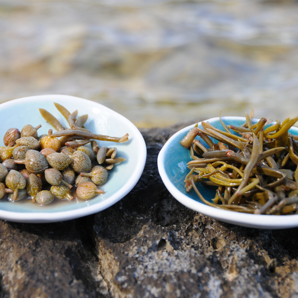 Pickled Rock Samphire