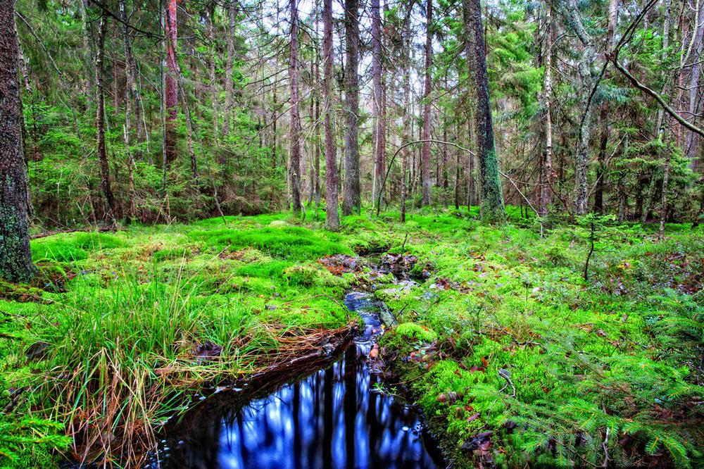 Mange er nok overrasket over hvor mye skog det er på Hvaler. Her finnes alt fra bøkeskog via oaser med svartorsumpskog til grantrær. Bildet er fra det flotte turområdet Barlinddalenpå Vesterøy.