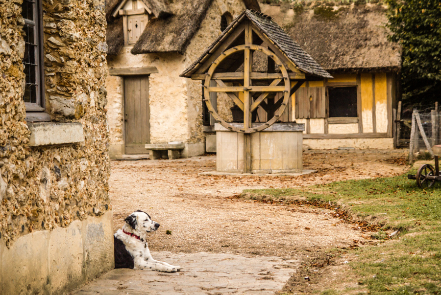 Dog at The Queen's Hamlet, Versailles