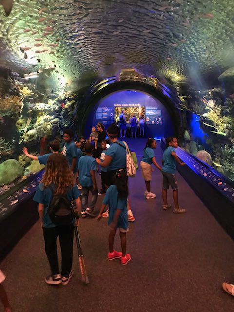At the aquarium.