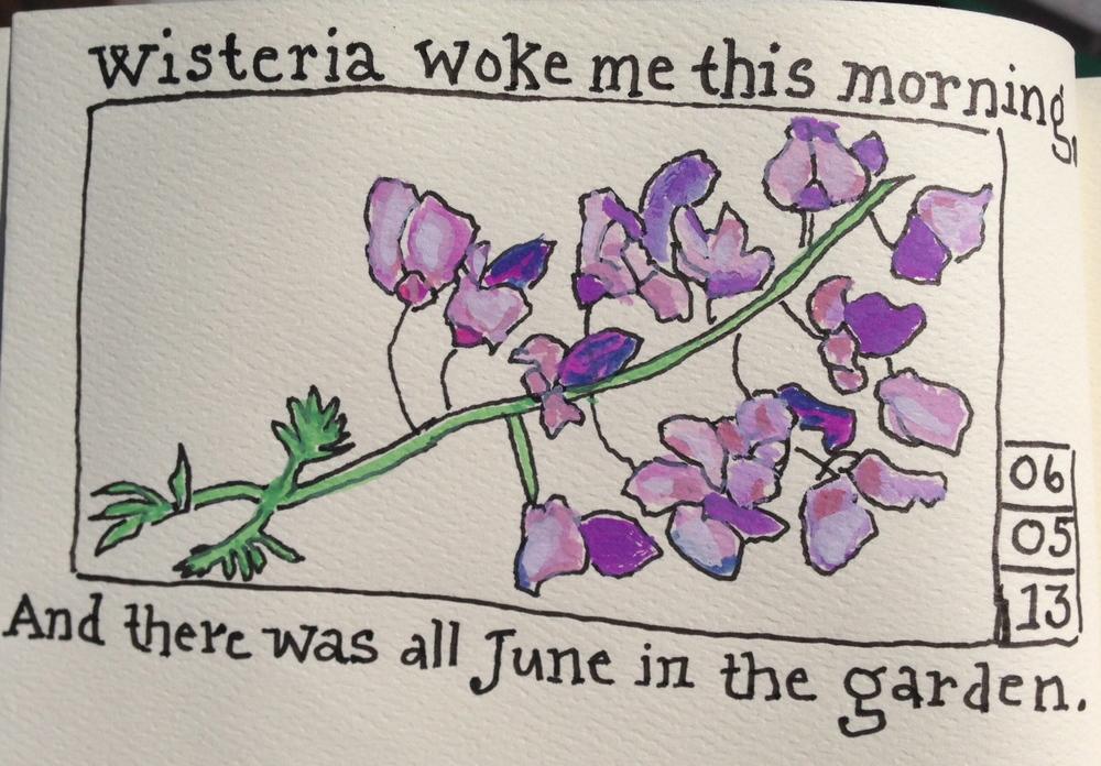 wisteria 12-04-08.jpg