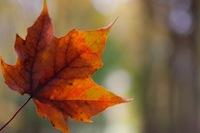 leaf#2.jpg