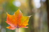 leaf#4.jpg