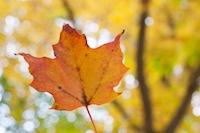 leaf#5.jpg