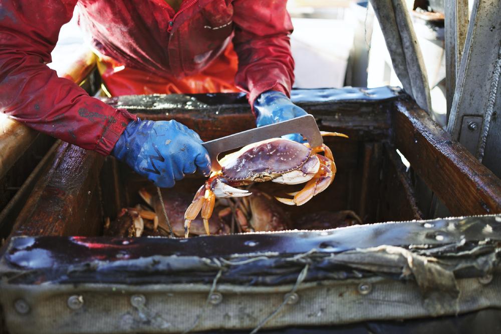 Crabbing13.jpg