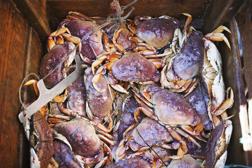 Crabbing19.jpg