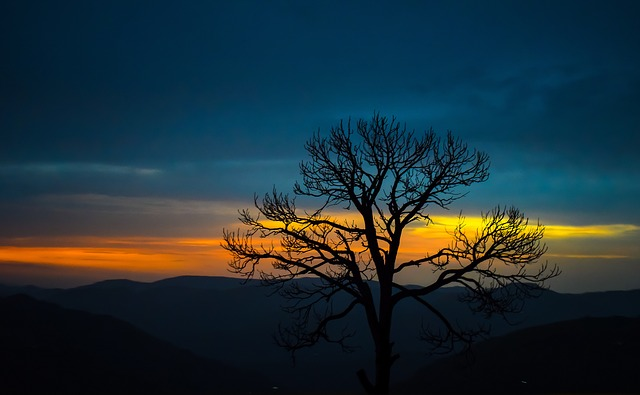 tree-2889063_640.jpg