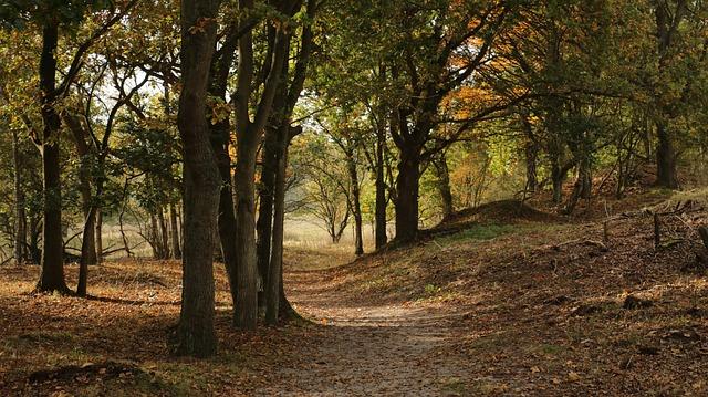 forest-2805931_640.jpg