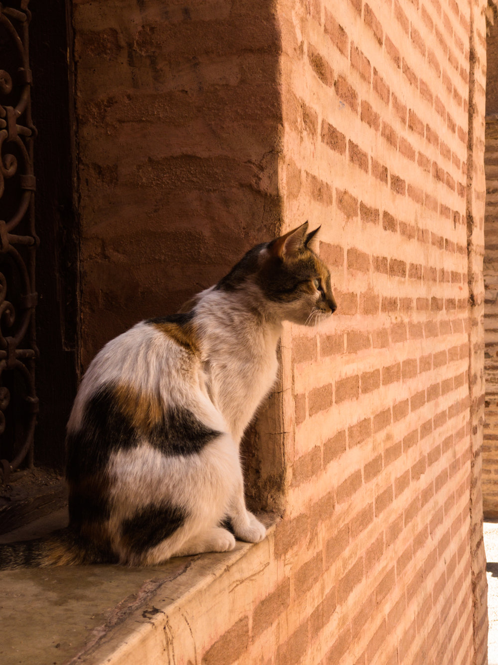 Marrakech_iPhone8+_Photos - Blog_Photos-16.jpg