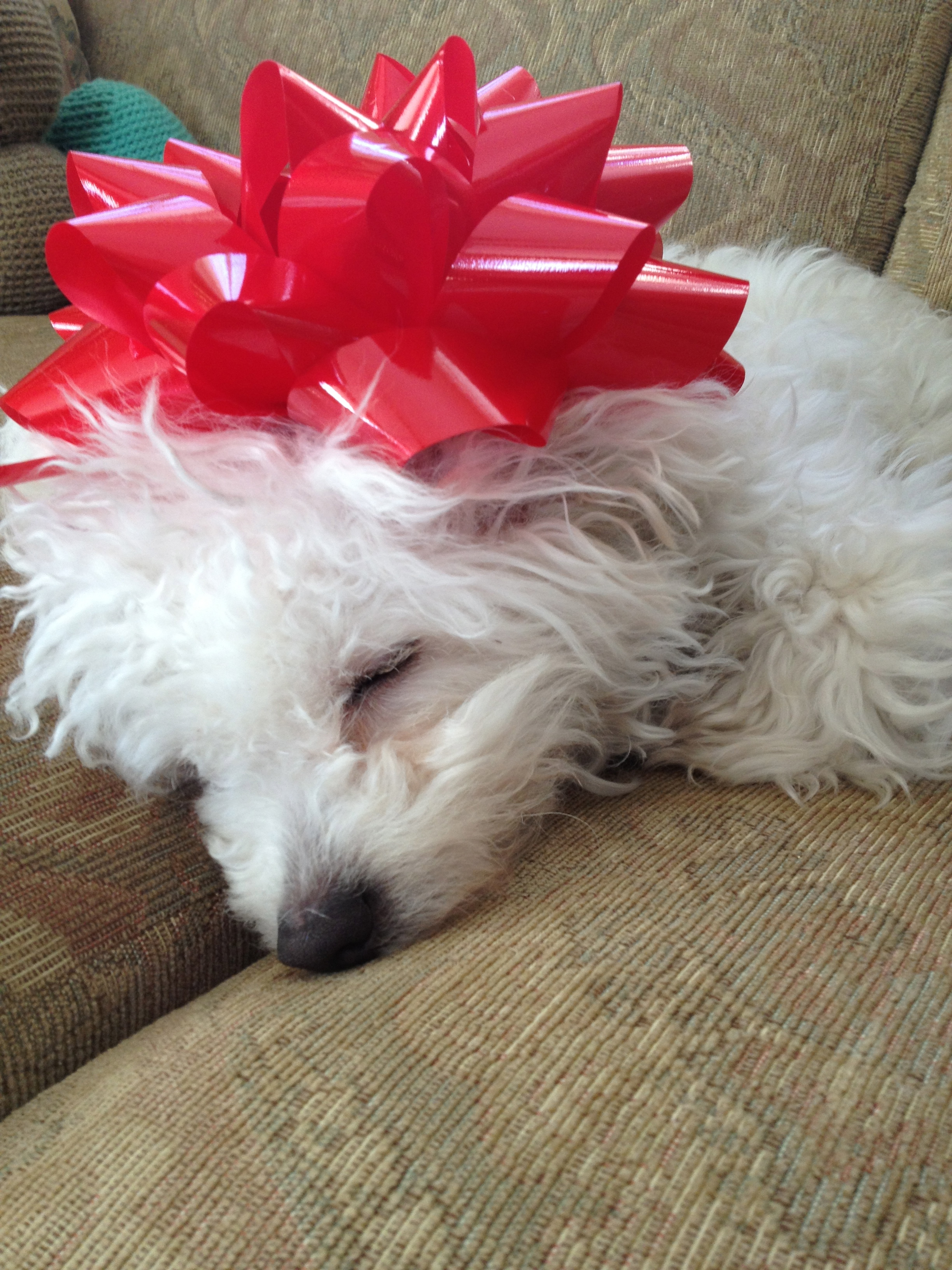 Worn out Christmas Puppy